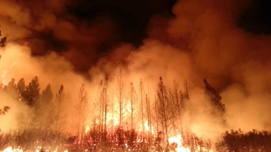 Wildfires+in+California+have+caused+immense+amounts+of+damage.+