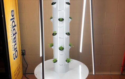 Cafeteria gets greener with soil-less growing system